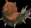 100px-Bark blamish snail