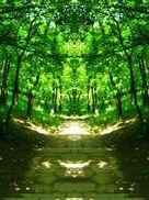 Nature magic2