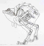 Nuna skeleton
