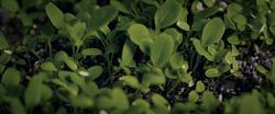 Plants growing