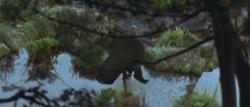 Lianorm Swamp TPM