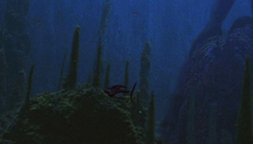 Ray fish TPM