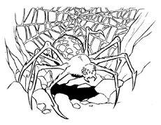 Purella Spider