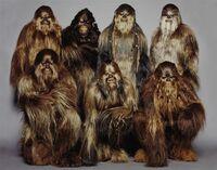 WookieeWarriors