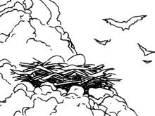 Avril Nest