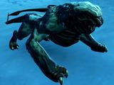 Ашарл-пантера
