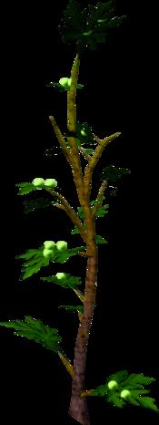 Mournberry bush
