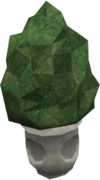 Small evergreen