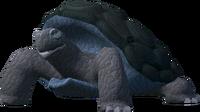 War tortoise (Familiarisation)