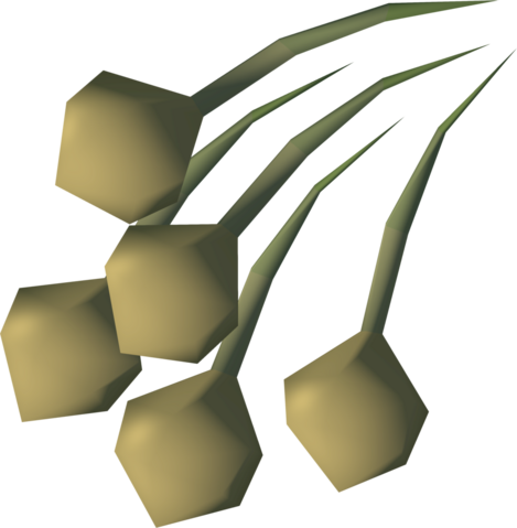 File:Onion seed detail.png