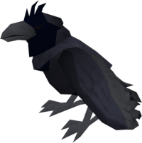 Raven (blue crested) pet