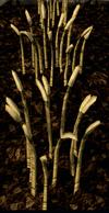 Barley4