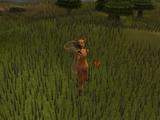 Ruby harvest (Hunter)