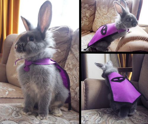 Loki the 99 Thieving Rabbit news image