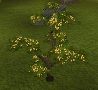 Neverberry bush