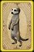 Scavenging meerkats card detail