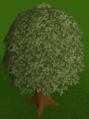 Oak tree built.png