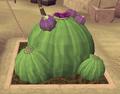 Potato cactus8.png