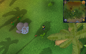Scan clue Kharazi Jungle just east of water pool
