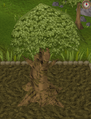 Spirit tree9.png