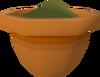 Papaya seedling detail