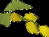 Yanillian hops