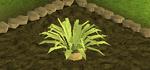 Pineapple plant 4