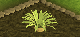 File:Pineapple plant 4.png