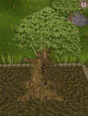 Spirit tree10