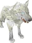 White wolf old
