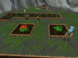 Money making guide/Farming lantadyme