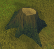 Willow stump
