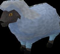 Sick looking sheep 3