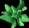 Grimy herb detail