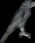 Silver hawk detail