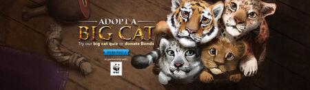 Big Cats head banner