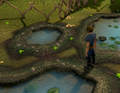 Collecting swamp toads.png