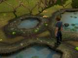 Money making guide/Collecting swamp toads
