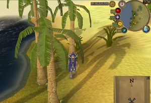 Compass clue north-western desert west of Kalphite Hive