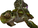 Treasure turtle