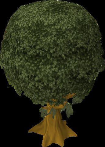File:Cedar tree.png