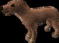 Greyhound puppy (light brown) pet.png