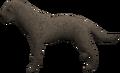 Labrador (grey) pet.png