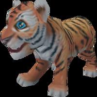 Tiger cub pet