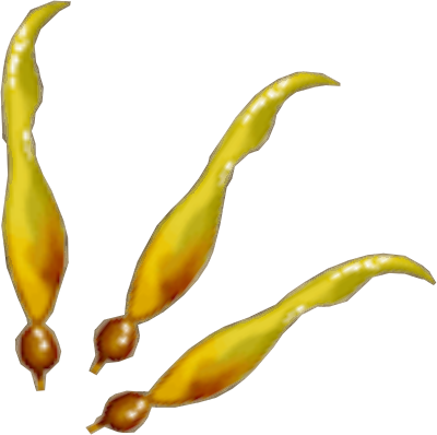 File:Kelp detail.png