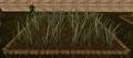 Reeds4.png