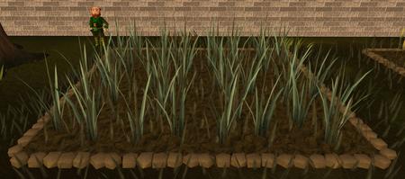 Reeds4