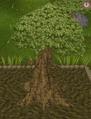 Spirit tree11.png