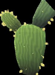 Kharidian cactus (Dry)