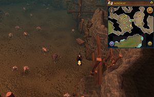Scan clue Fremennik Slayer Dungeon south-east side of turoth chamber
